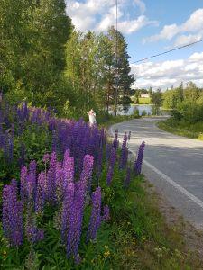 Karhelainen kyläraitti symbolisoi hyvin Pirkan Kylät ry:n kyläasiamiehen näkemystä siit, että maaseutu Pirkanmaalla voi ihan hyvin. (Kuva: Matti Pulkkinen)