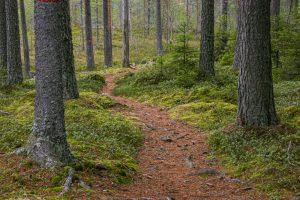 Luonnon monimuotoisuus on turvattava, vihreät vaativat. (Kuva: Harri Luojus)